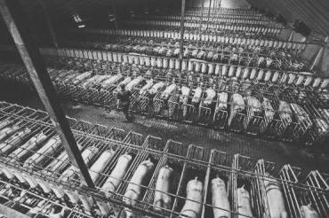 http://brisbanenaturalhealth.com/organic-free-range-caged-barn-laid-meat-and-eggs-what-does-it-all-mean/